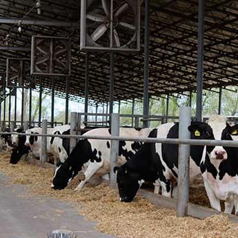 Молочне тваринництво Украгрохолдинг